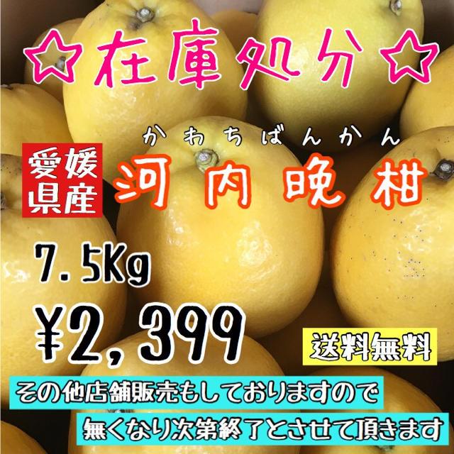 河内晩柑(家庭用)⒎5kg 食品/飲料/酒の食品(フルーツ)の商品写真