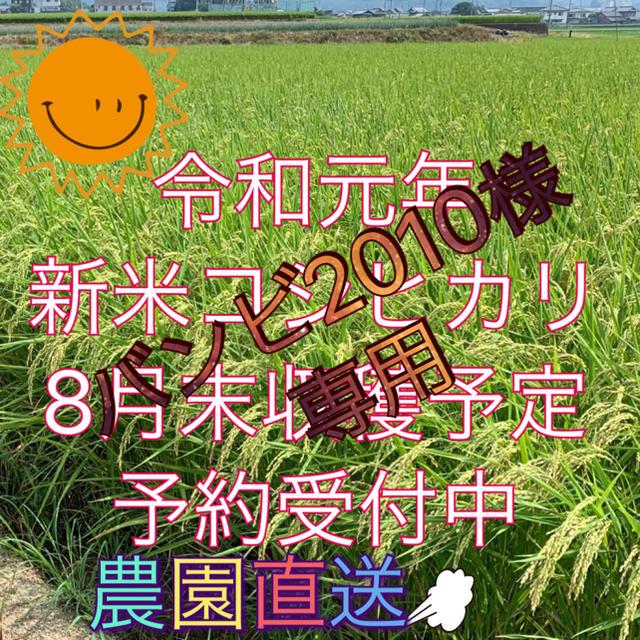 バンビ2010様専用  新米コシヒカリ 食品/飲料/酒の食品(米/穀物)の商品写真