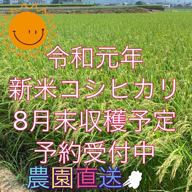 ひみちゃん様  専用 令和元年度新米コシヒカリ30kg   食品/飲料/酒の食品(米/穀物)の商品写真