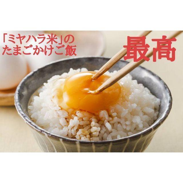 【minaru様専用】ミヤハラ米(白米)5kg★味保証★食味特A 食品/飲料/酒の食品(米/穀物)の商品写真