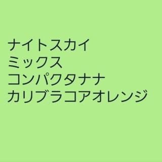 【ペチュニア㉖】ハンギングミックス 種子30粒(その他)