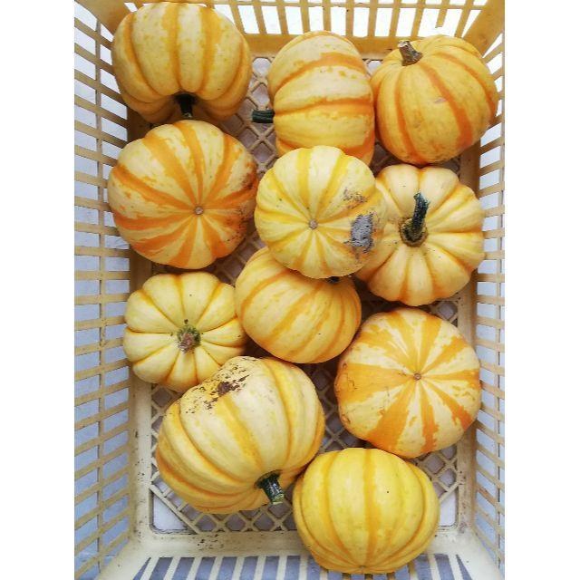 西洋カボチャ・プッチーニ 4キロ 食品/飲料/酒の食品(野菜)の商品写真