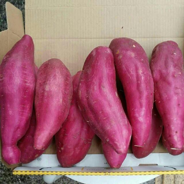 宮崎(新)さつまいも(宮崎紅)2kg 約10~15本入り 食品/飲料/酒の食品(野菜)の商品写真
