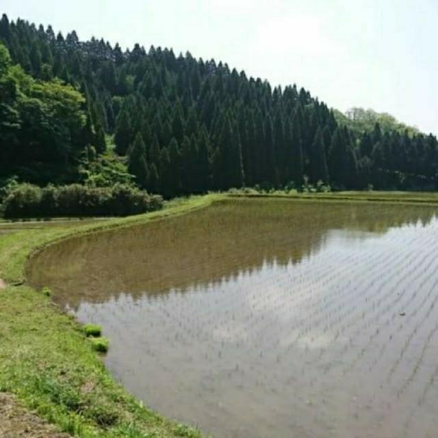 熊本県阿蘇の美味しい棚田米 30㌔ 残り1 食品/飲料/酒の食品(米/穀物)の商品写真