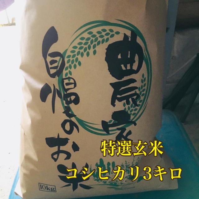 特選玄米コシヒカリ3キロ 食品/飲料/酒の食品(米/穀物)の商品写真