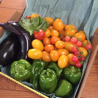 80サイズ専用ページ(野菜)