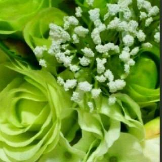 shiro - 〘 新品〙shiro  サボン 練り香水♡ショッパー付き♡シロ 練り香水