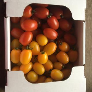 ミニトマト(アイコ、イエローアイコ)詰め合わせ1,8kg(野菜)