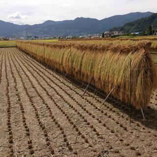 平成30年 長野県産 天日干しコシヒカリ精米10kg(米/穀物)