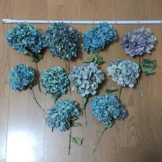 【may様確認用】アジサイドライフラワー 薄紫~青緑紫 10(ドライフラワー)