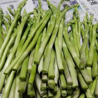 出雲市産 グリーンアスパラガス 500グラム 送料込み(野菜)