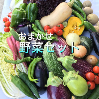 お任せ野菜BOX  M(野菜)