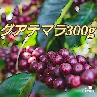 コーヒー 豆 グアテマラ 300g 自家焙煎珈琲