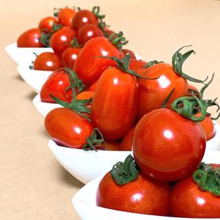 ☆食べ比べセット☆ 朝どり 赤だけミニトマト 5品種 約750g 青森県産