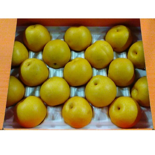《お待たせ致しました!1》毎年大好評!豊水梨 送料無料 食品/飲料/酒の食品(フルーツ)の商品写真