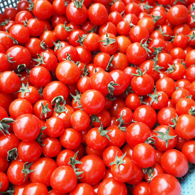 北海道 富良野産 ミニトマト 1キロ 食品/飲料/酒の食品(野菜)の商品写真