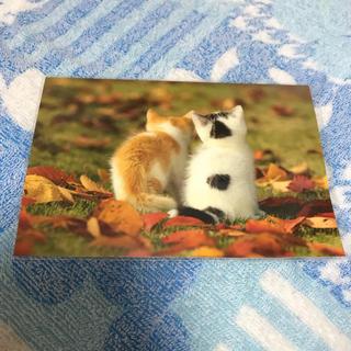秋猫 ポストカード
