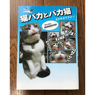 猫バカとバカ猫 写真漫画