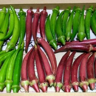 穫れたて!!3色(赤・白・緑)丸オクラセット(ネコポスいっぱい。即購入歓迎)