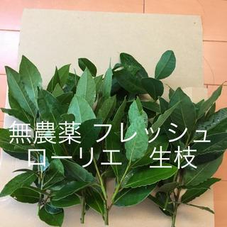 無農薬 ローリエ   生枝
