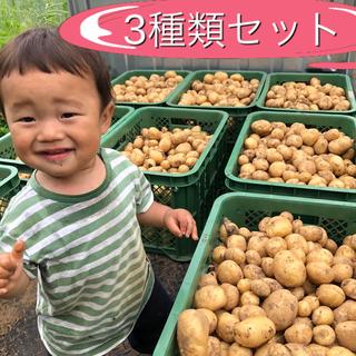 じゃがいも 野菜 無農薬  詰め合わせ  セット無肥料 自然栽培 送料無料