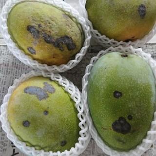 29 キーツマンゴー 2.7kg 家庭用 黒点あり(フルーツ)