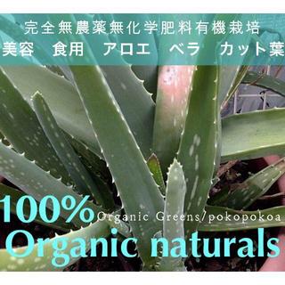 有機 アロエベラ カット 葉 食用 美容 完全無農薬無化学肥料有機栽培