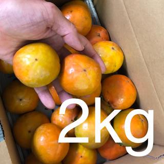 柿は和歌山♩「炭入り西村早生柿」24玉ぐらい(フルーツ)