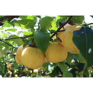 梨 幸水 2k箱 約2.2k 6~8個入り(フルーツ)