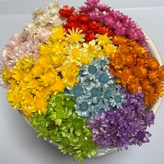 スターフラワーブロッサム&キャンディ   100本 ハンドメイドのフラワー/ガーデン(ドライフラワー)の商品写真