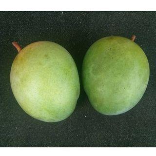 沖縄本島産 絶品!!旬のキーツマンゴー1.5kg ♪(フルーツ)