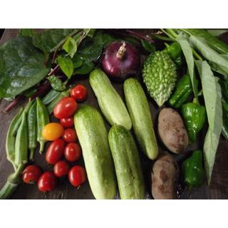 野菜セット 60サイズ 農薬/化学肥料不使用 有機栽培(野菜)