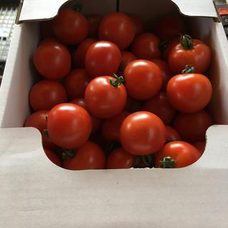ミディトマト(フルティカ)ミニトマトアイコ、イエローアイコ3、6kg(野菜)