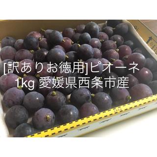 [糖度17〜18]ピオーネ約1kg 粒売り(フルーツ)