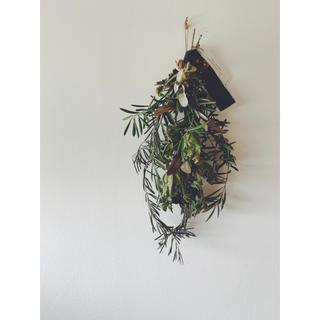 オリーブのグリーンスワッグC イチジクの葉とローゼル(ドライフラワー)