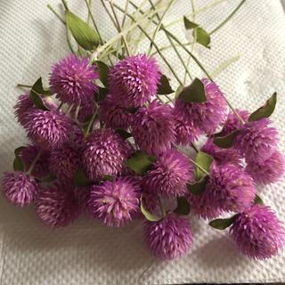 ドライフラワー花材センニチコウ30本(ドライフラワー)