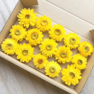 花材セット ヘリクリサム ドライフラワー イエロー15個  ハーバリウムなどに♪(ドライフラワー)