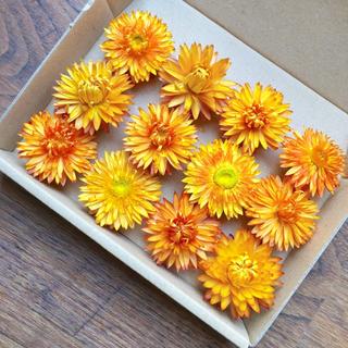 花材セット ヘリクリサム ドライフラワー オレンジ12個  ハーバリウムなどに♪(ドライフラワー)