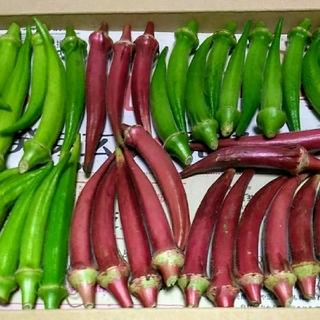 穫れたて!!3色(赤・白・緑)丸オクラセット(ネコポスいっぱい。即購入歓迎)(野菜)