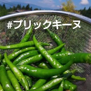 お値下げ‼️プリックキーヌ 青唐辛子 無農薬(野菜)