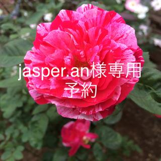 jasper.an様専用 予約(ドライフラワー)