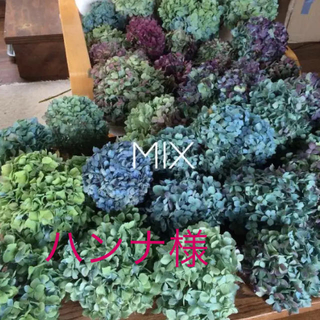 ハンナ様専用 紫陽花ドライフラワー(ドライフラワー)