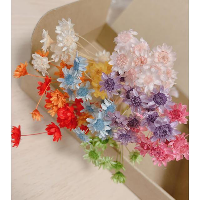 花材 ハーバリウム 小花 ハンドメイドのフラワー/ガーデン(ドライフラワー)の商品写真