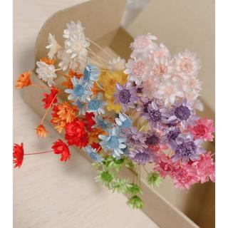 花材 ハーバリウム 小花(ドライフラワー)
