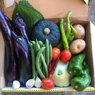 本日発送 栽培期間中農薬不使用コンパクト便 夏野菜セット約1.4kg(箱込み)(野菜)
