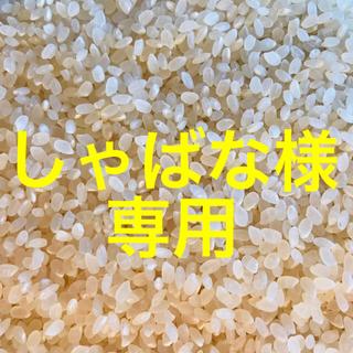 しゃばな様専用(遊園地/テーマパーク)