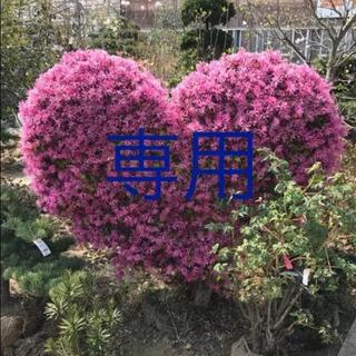 みゅう様 専用★マザーリーフ★親葉★奇跡の葉❤️★多肉植物(その他)