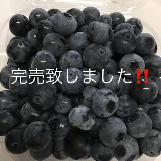 ブルーベリー 500〜600g 完売致しました❗️(フルーツ)