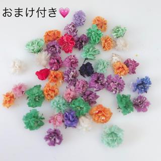 ドライフラワーかすみ草 カラフル 50粒(ドライフラワー)