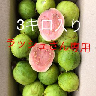 無農薬徳之島産グァバ3キロ入り4500円(フルーツ)